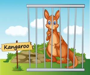 14528651 - illustration of a kangaroo in cage and wooden board